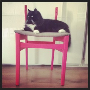 Stevie, my cat, testing the unfinished chair.